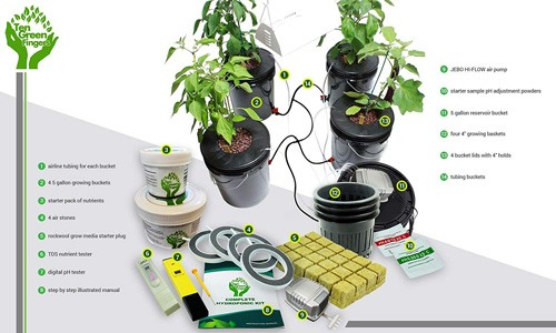 DWC Deep Water Culture Hydroponic System